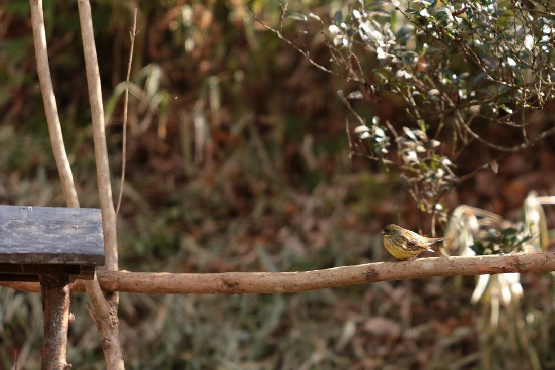 歩いて探そう 森のミステリー~やしろの森の鳥のヒミツ~
