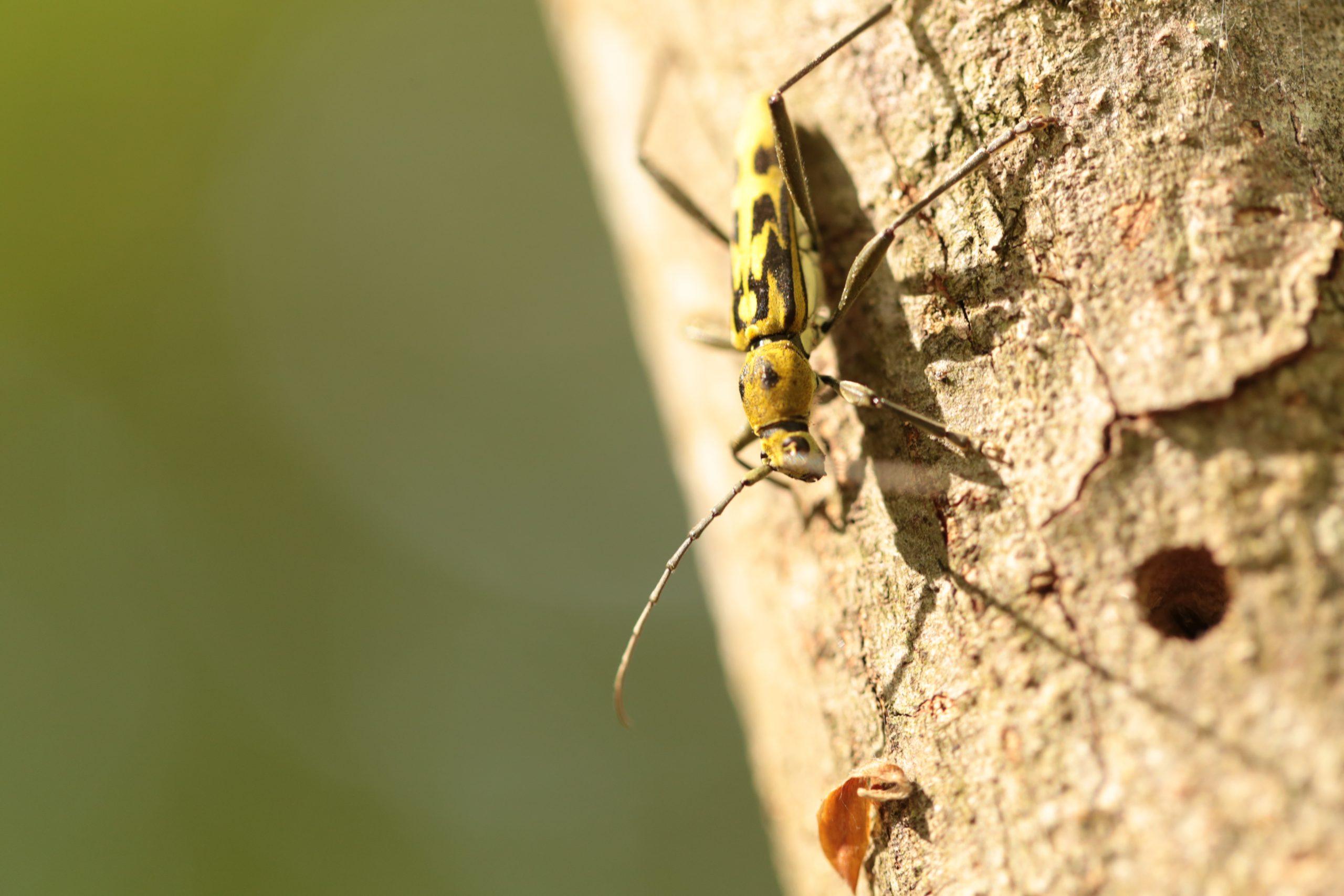 甲虫類観察スポット造成